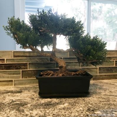 bonsai-tree