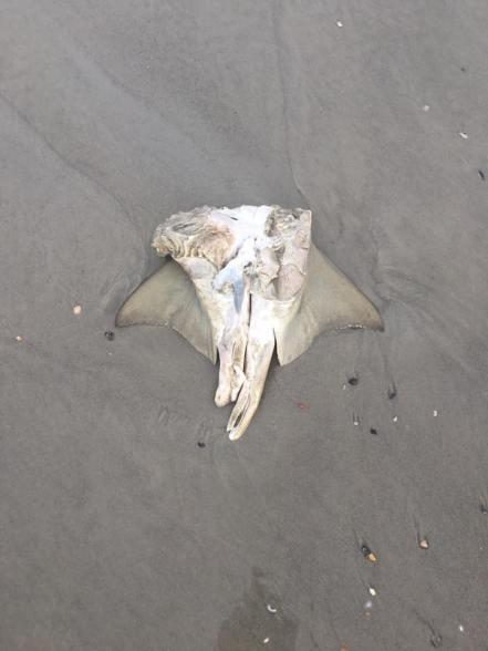 shark claspers