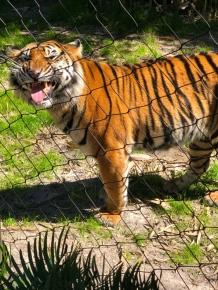Jacksonville-Zoo (17)