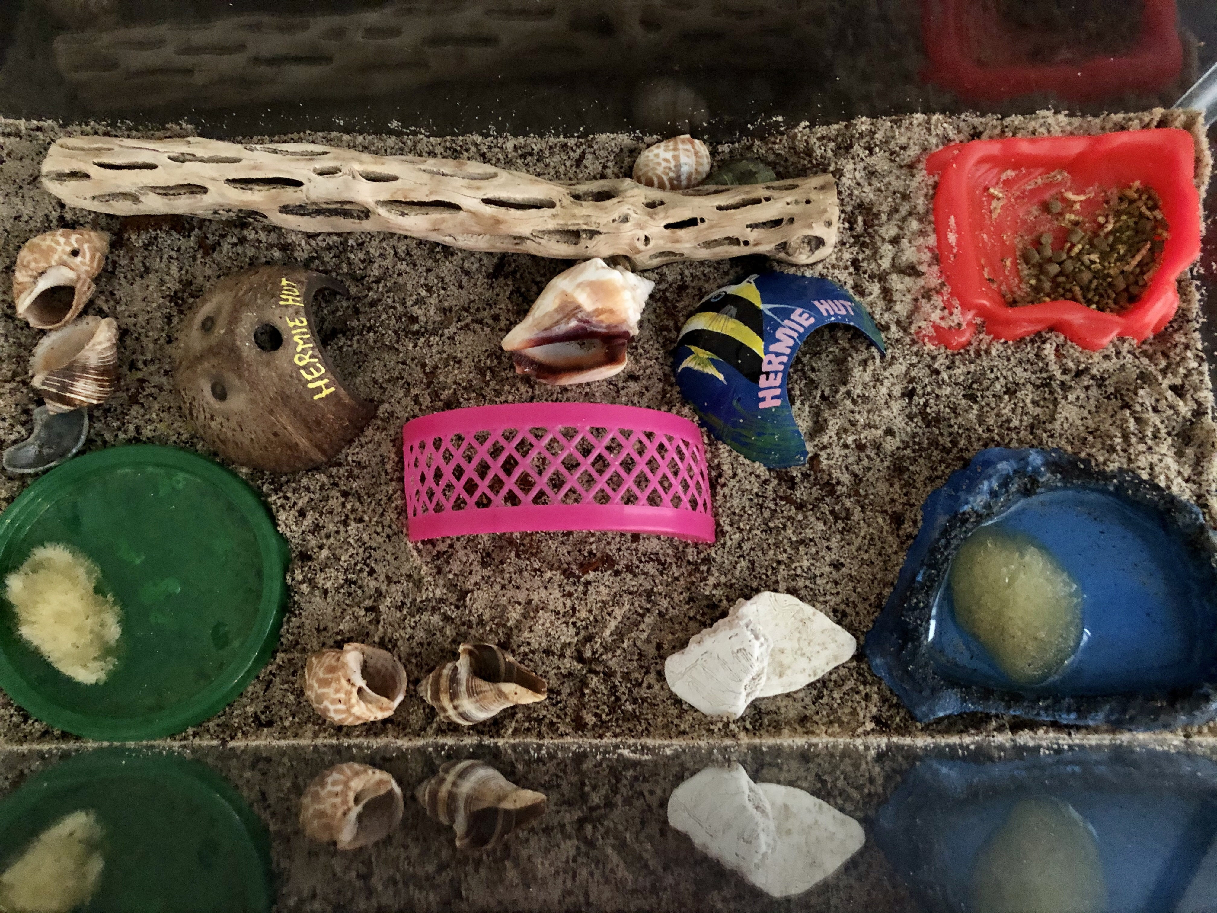 hermit crabs as pets