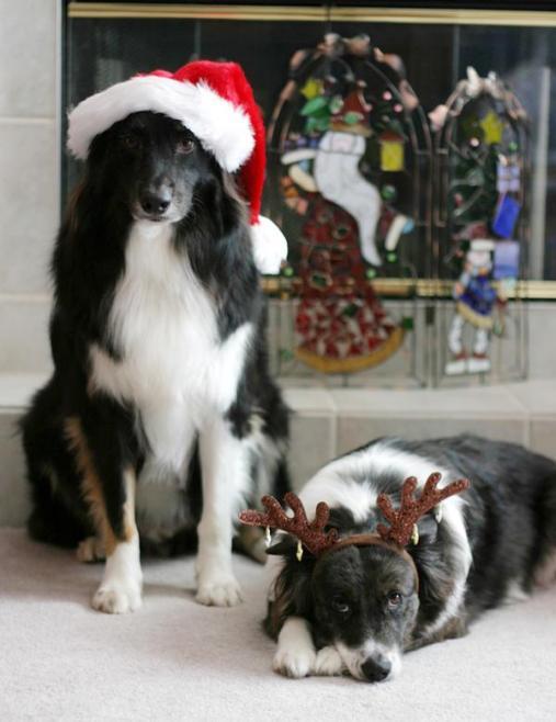 Christmas dogs santa and reindeer