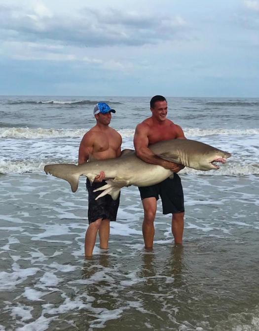 shark-atlantic-beach