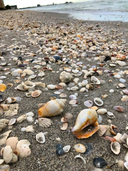 SO many shells!