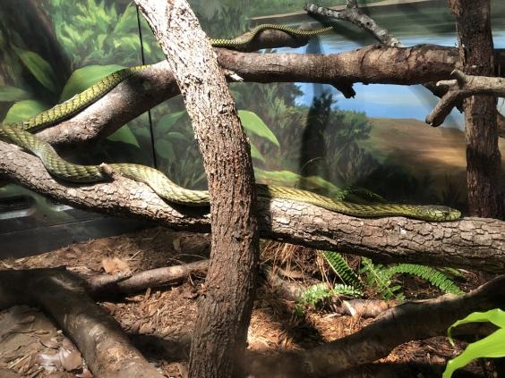 Jacksonville-Zoo (6)