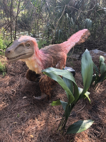 dinosauria-jacksonville (14)